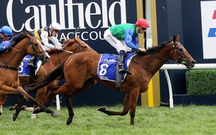 Bonneval - Multiple Gr.1 winner and NZ Horse Of The YearSpelled at Henley Park